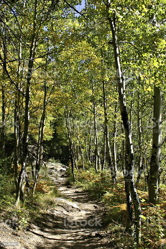 Tree-Lined Hiking Trail in Rocky Mountain National Park, Colorado stock photo