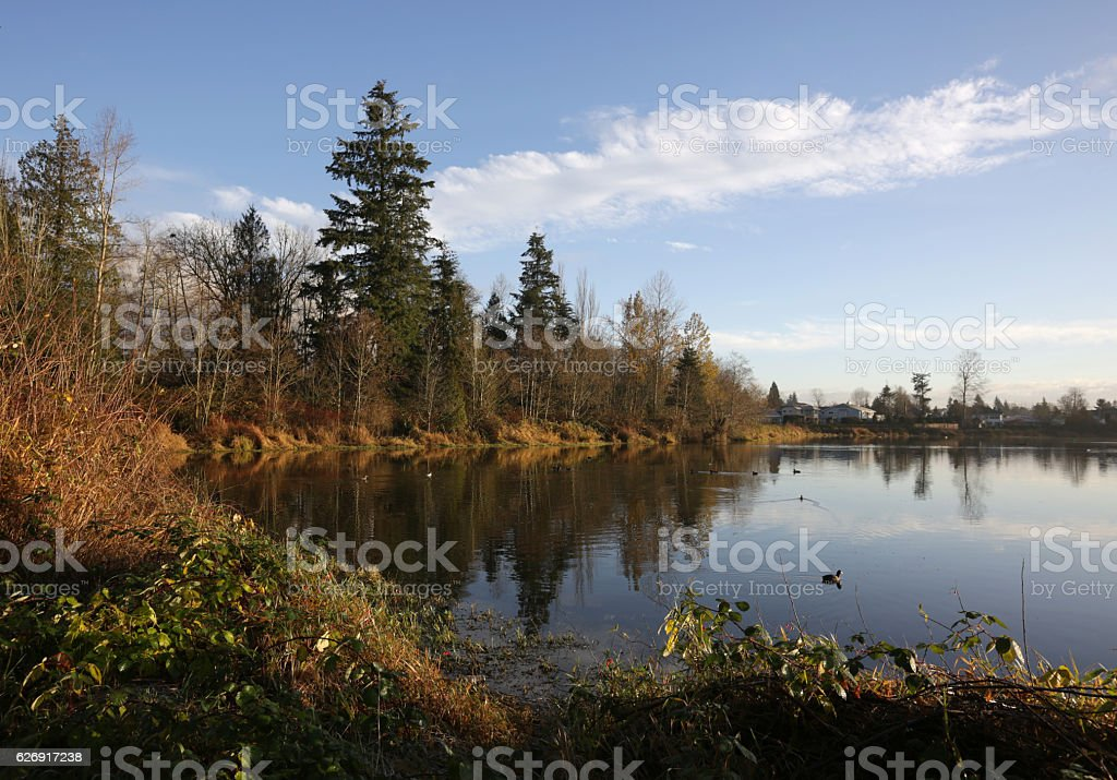 Tree-lined Lagoon in Fraser Valley, British Columbia, Canada, Autumn stock photo