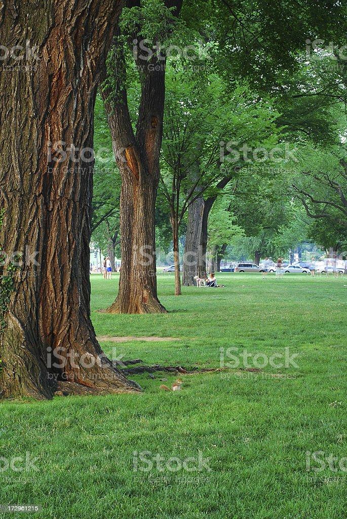 Treelined Park royalty-free stock photo