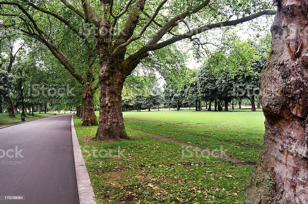 treelined park with road stock photo