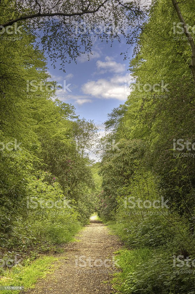 Tree-Lined Path royalty-free stock photo