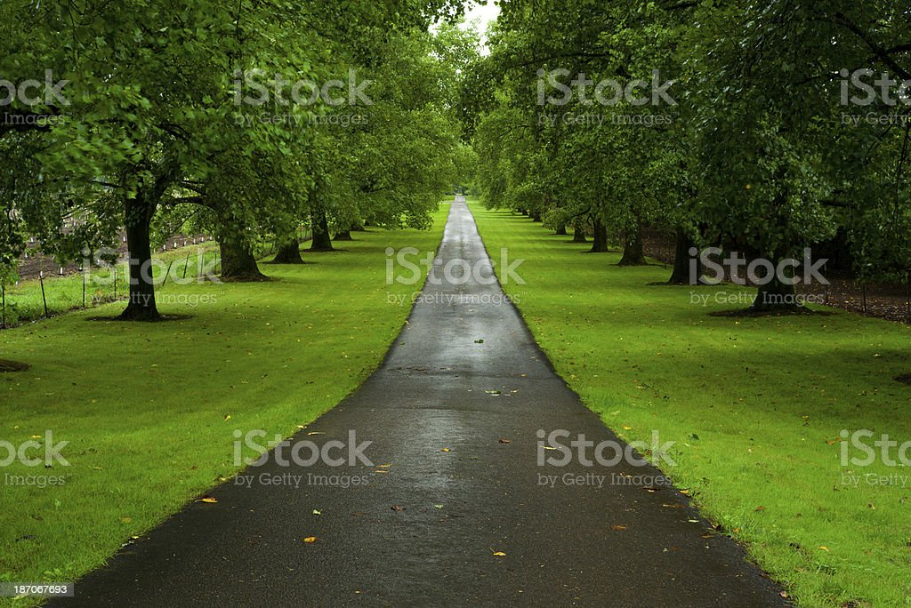 Tree-lined road after summer rain royalty-free stock photo