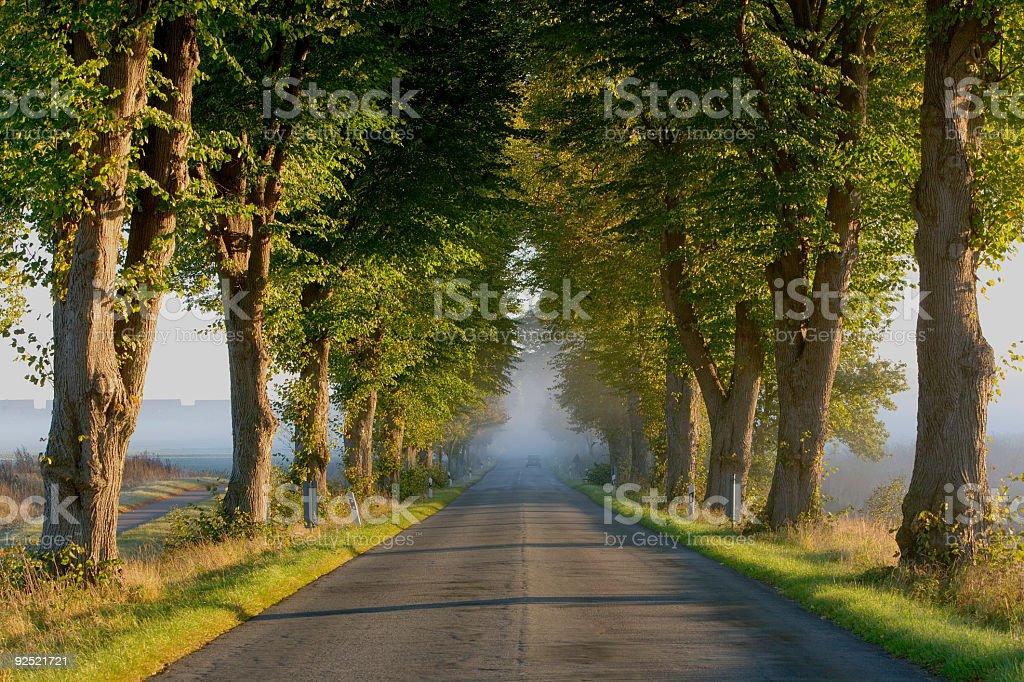 Treelined road at sunrise in fog (XXL) royalty-free stock photo