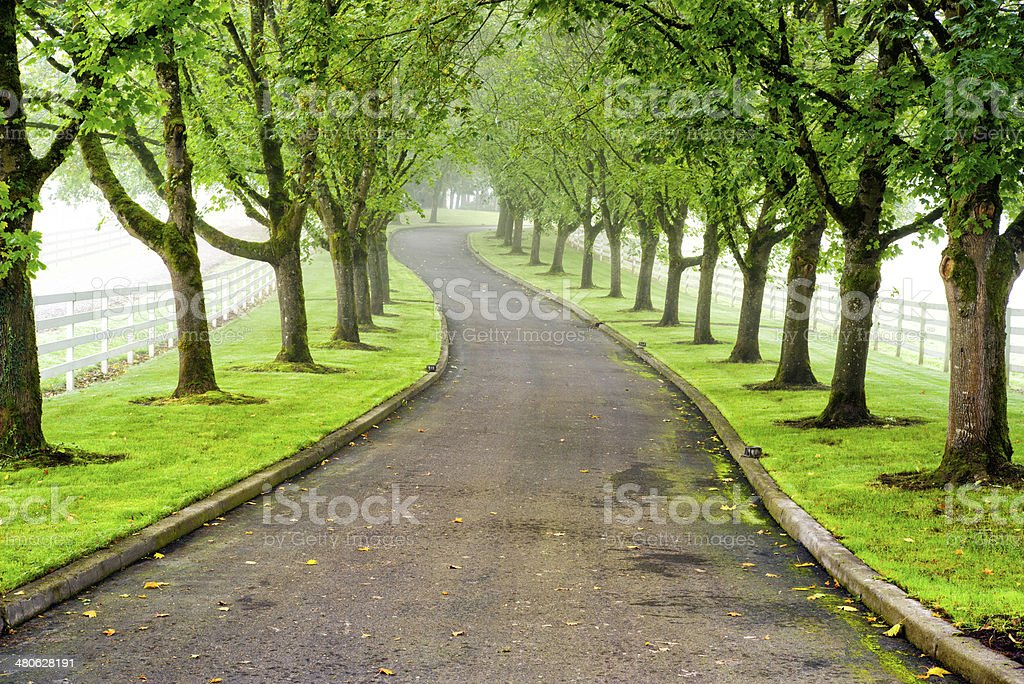 Tree-lined road, driveway stock photo