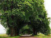 Treelined road in Mazury, Poland