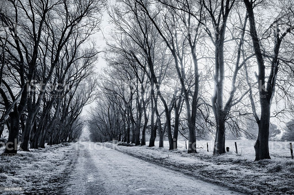 Treelined Road in Winter Diminishing Perspective stock photo
