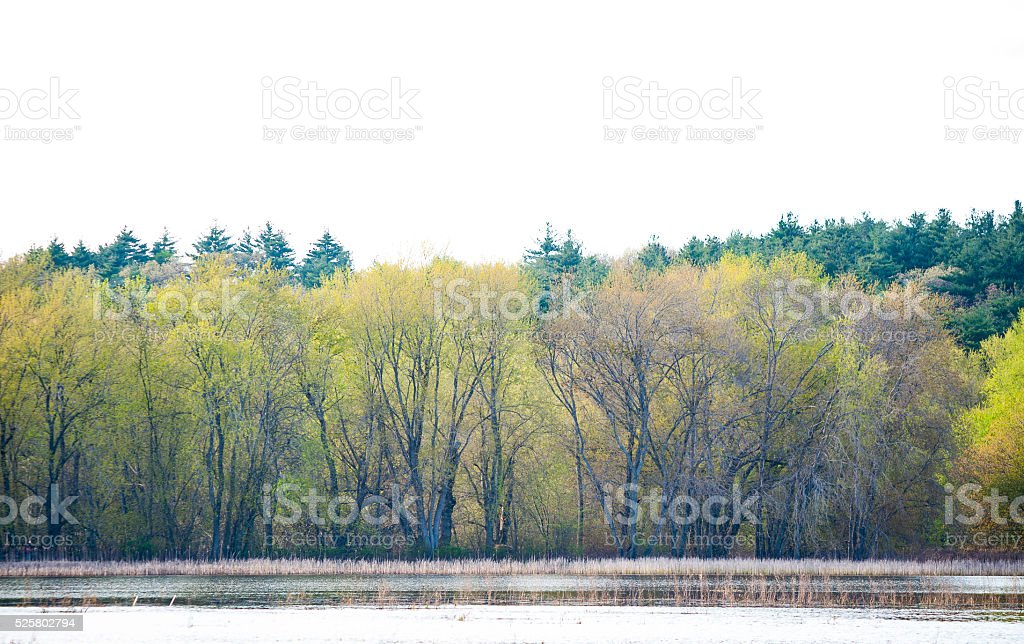 Tree-lined shore of pond stock photo