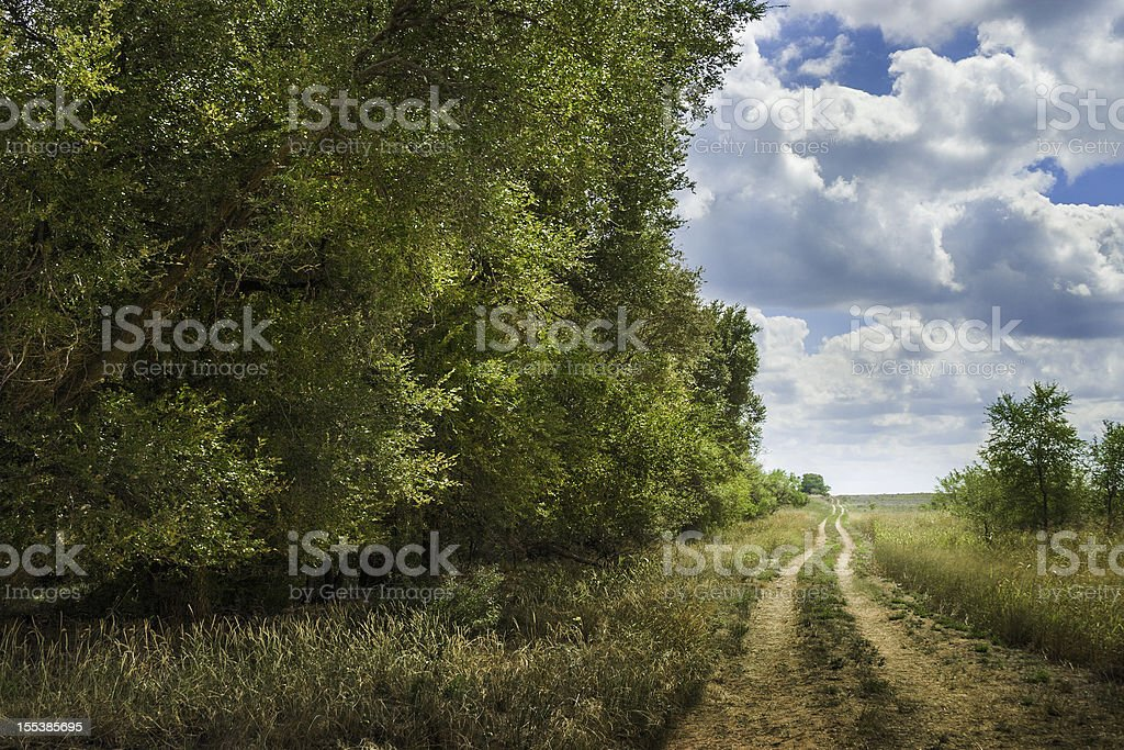 tree-lined West Texas meandering dirt road royalty-free stock photo