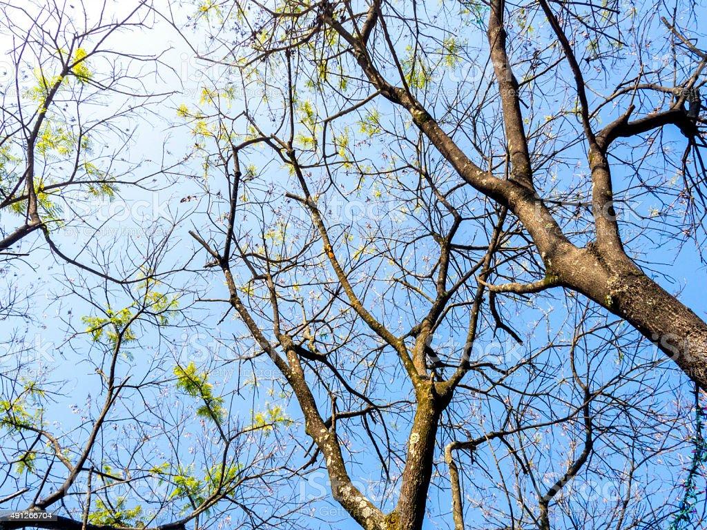 Treen in the sun royalty-free stock photo