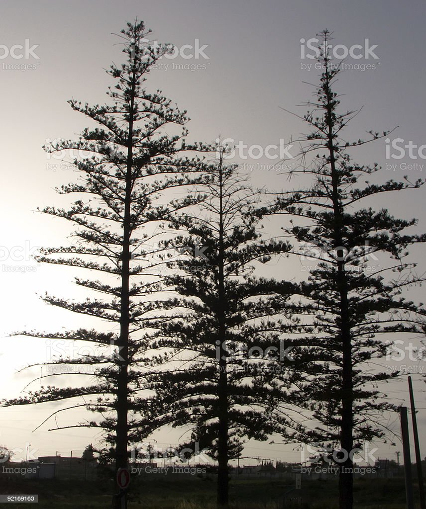 Tree-Outline royalty-free stock photo