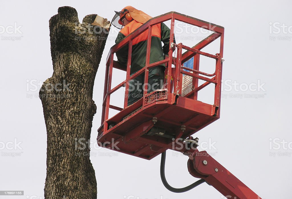 TreeRemoval royalty-free stock photo