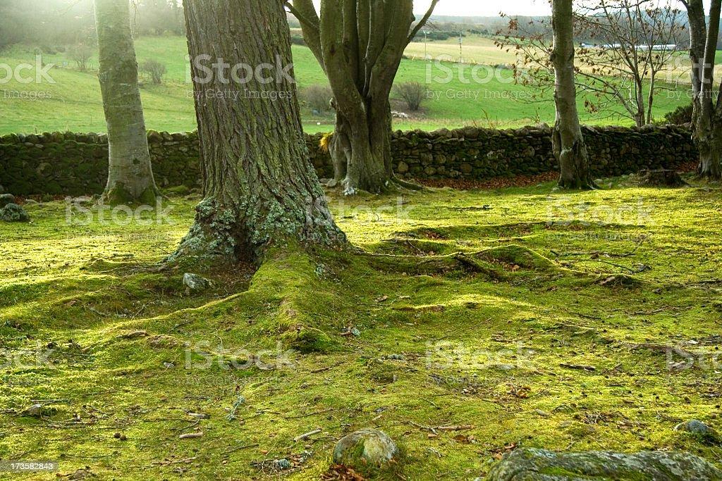 TreeRoots stock photo