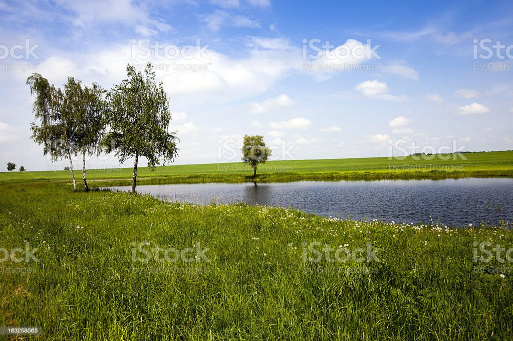 trees about the lake royalty-free stock photo