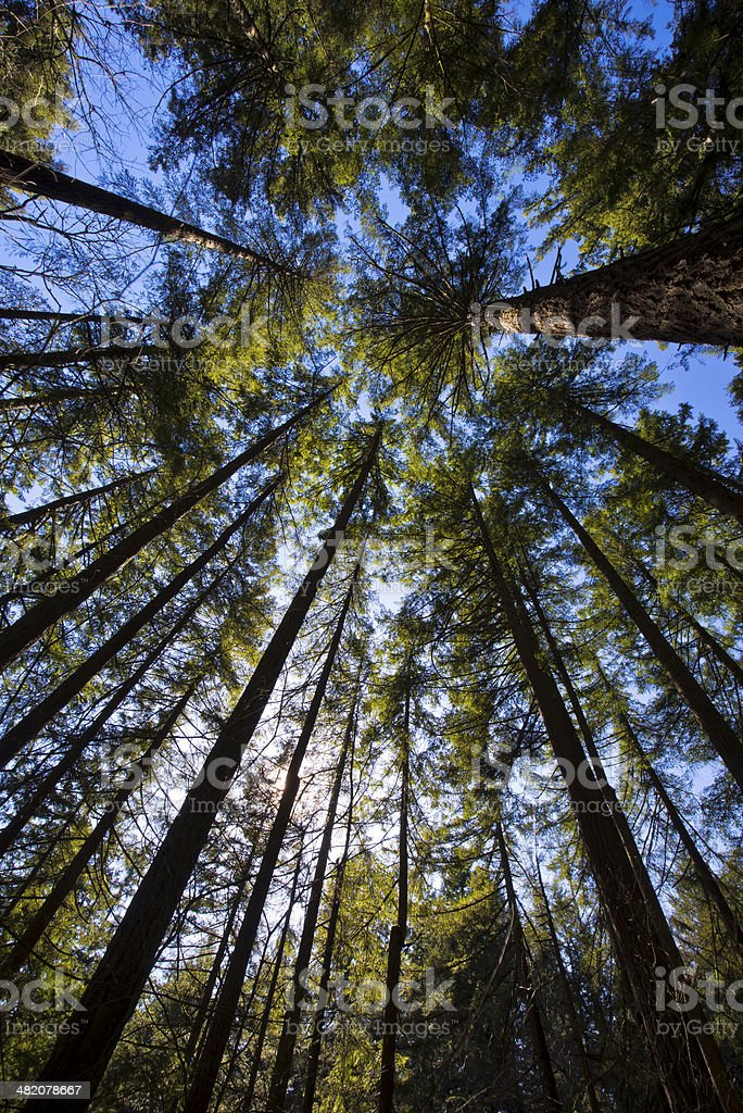 Trees abut the sky stock photo