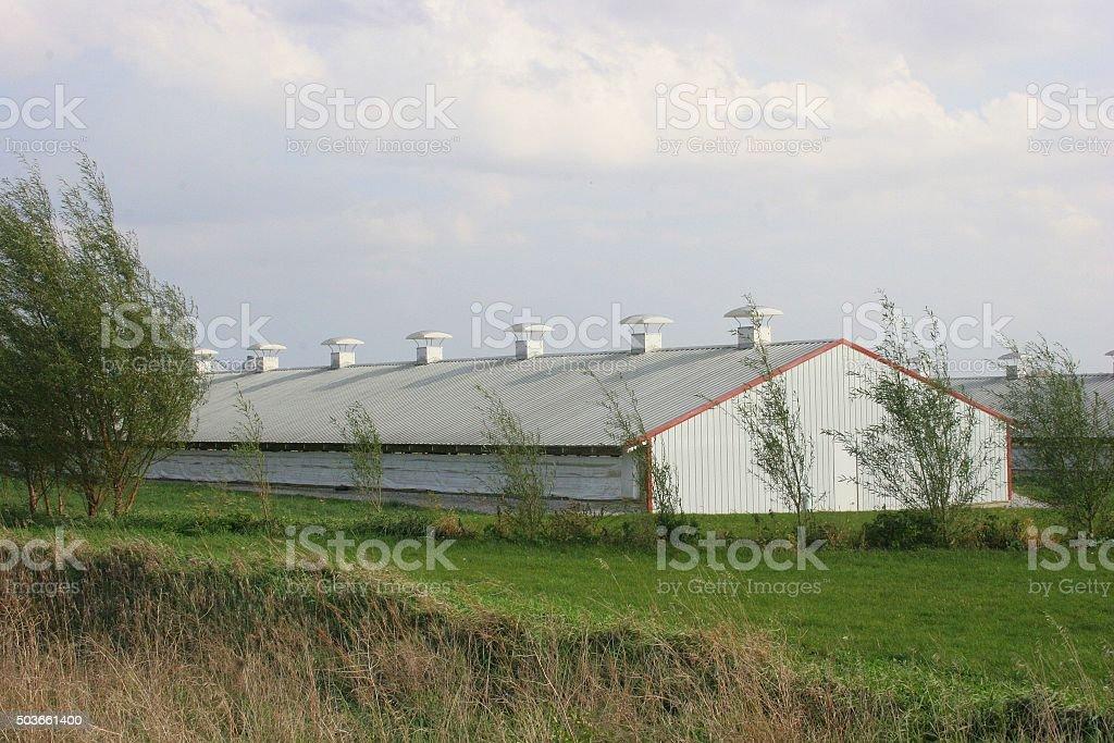 Trees Accent an Iowa Swine Barn stock photo
