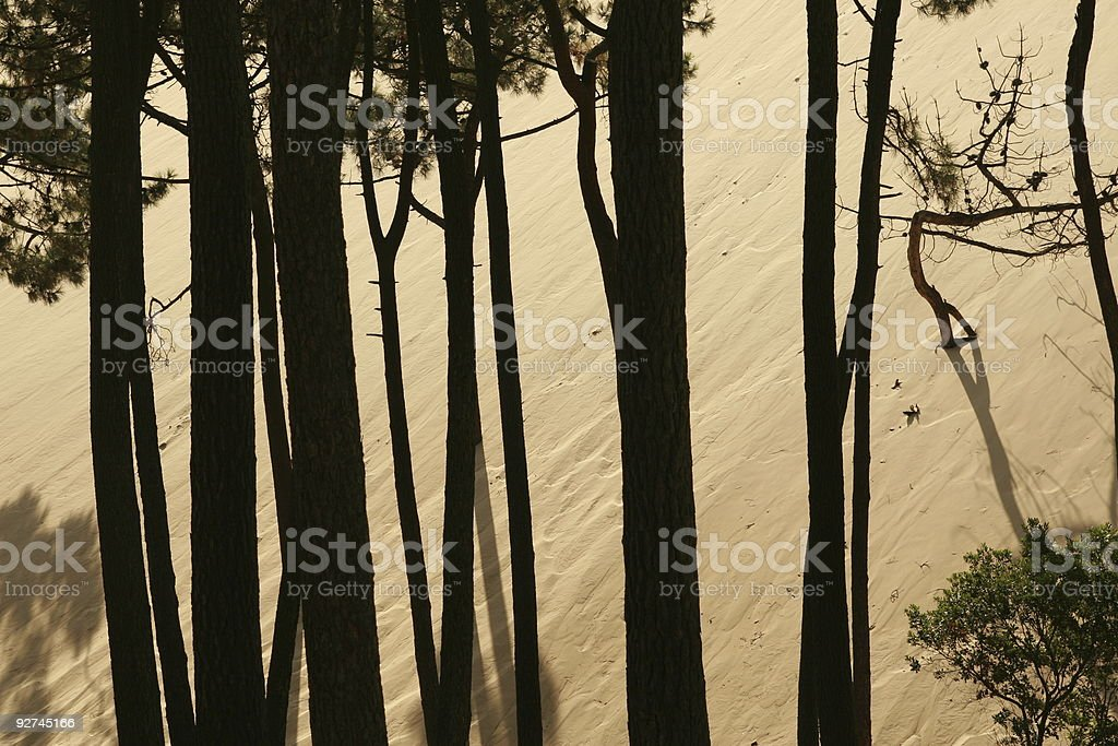 Trees against a dune. stock photo