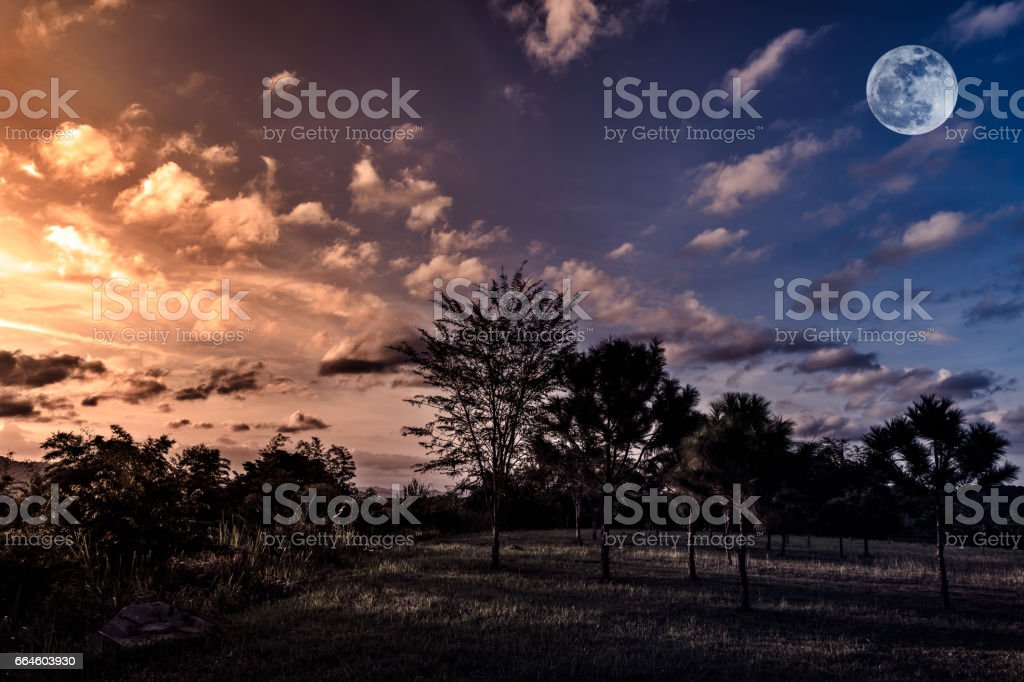 Trees against sky with clouds and moon over tranquil nature. stock photo