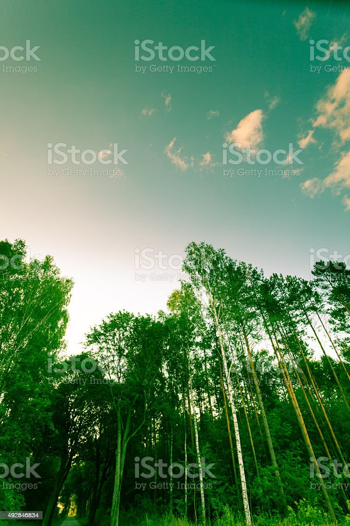 Trees against the blue sky. stock photo