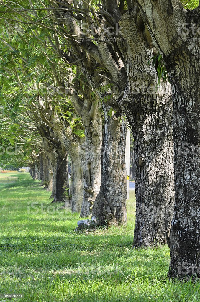 Trees alley in nature stock photo