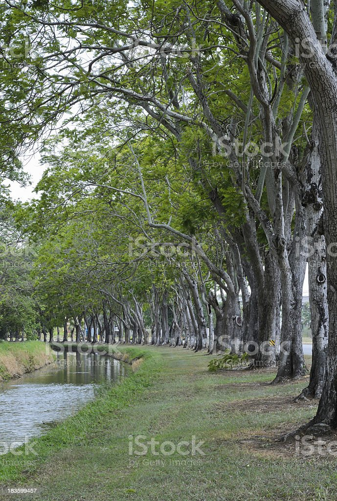 Trees alley stock photo