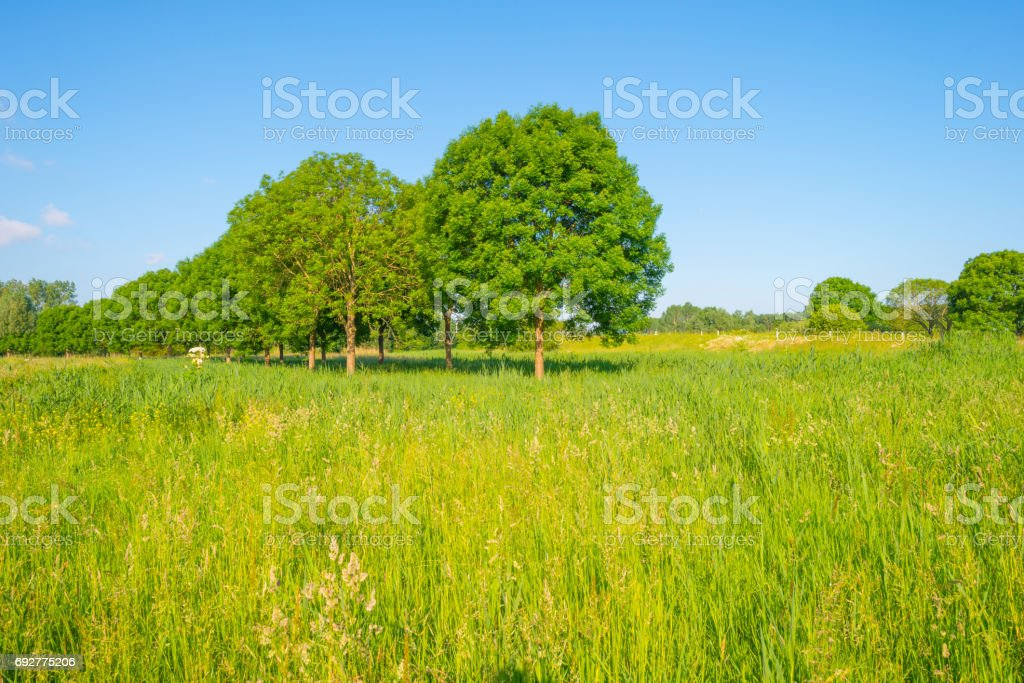 Trees along a field in sunlight in spring stock photo