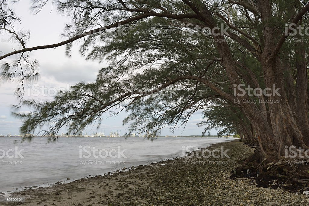 Trees along Beach stock photo