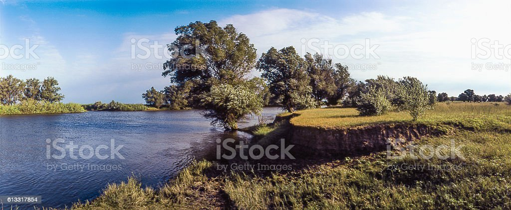 Trees (Willow) along  river. Typical nature of  Astrakhan region, Russia stock photo