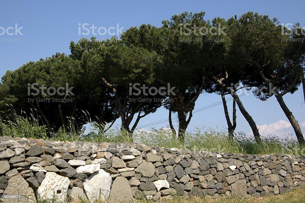 Trees Along the Appian Way stock photo