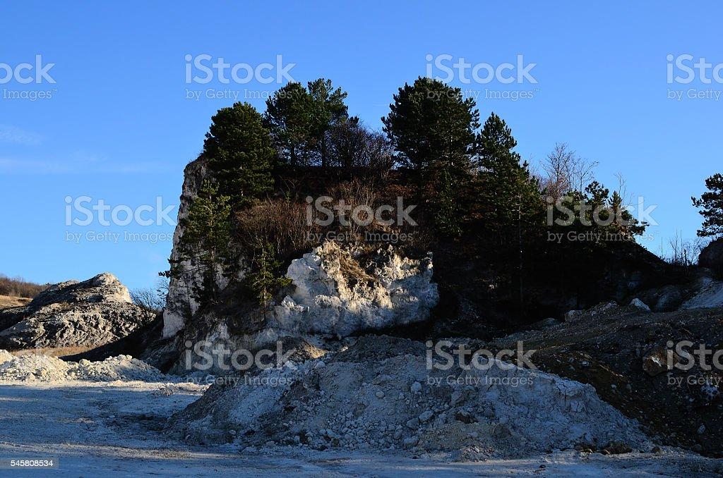 trees along the white chalk cliffs stock photo