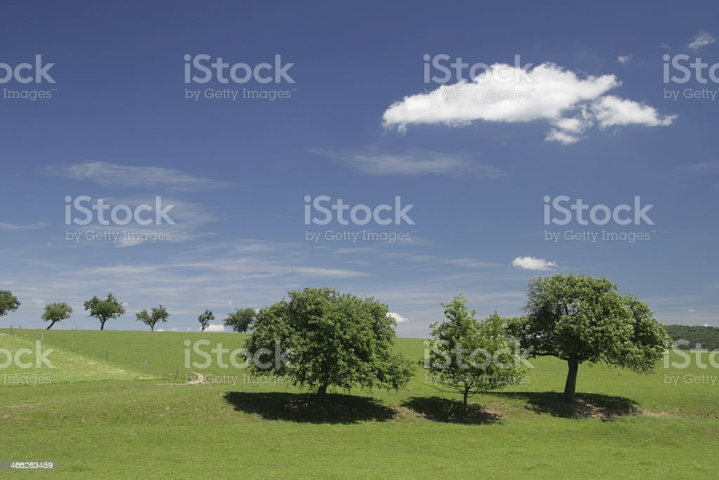 trees and a cloud royalty-free stock photo