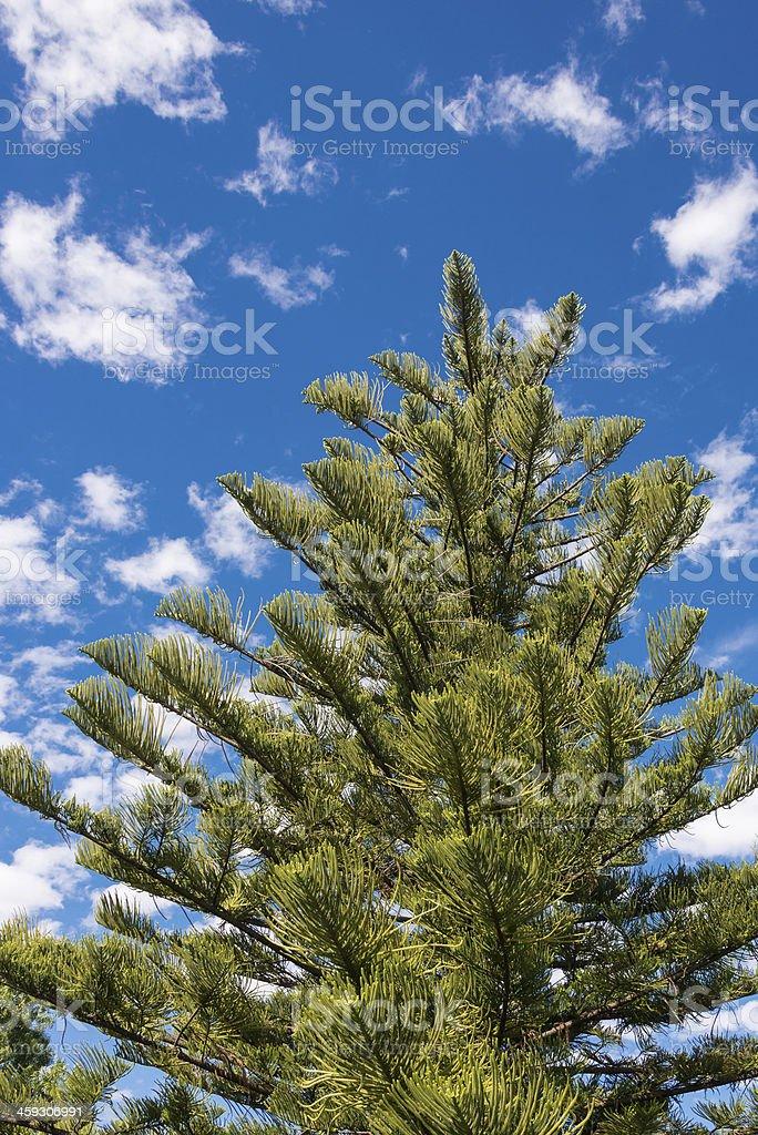 Árvores e céu azul foto royalty-free