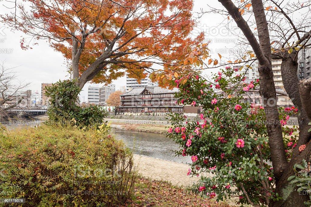 Trees and bushes framing the Tsuruse traditional ryokan in Kyoto stock photo