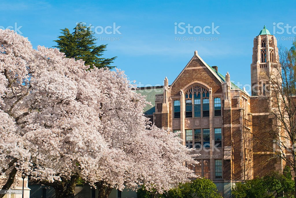 Trees and campus building at University of Washington stock photo
