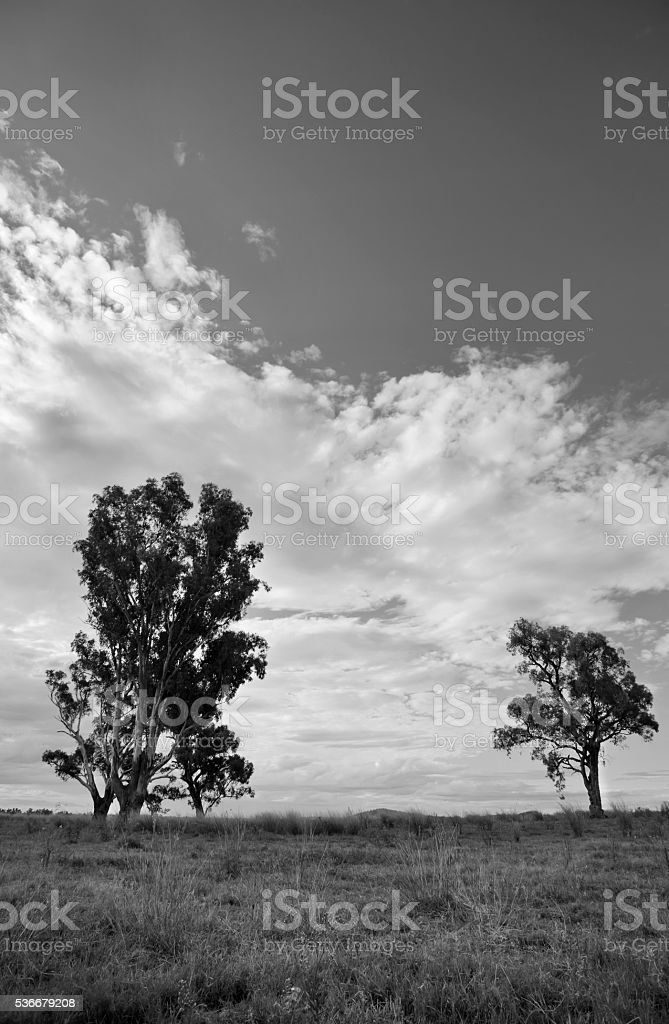 Trees and Clouds stock photo