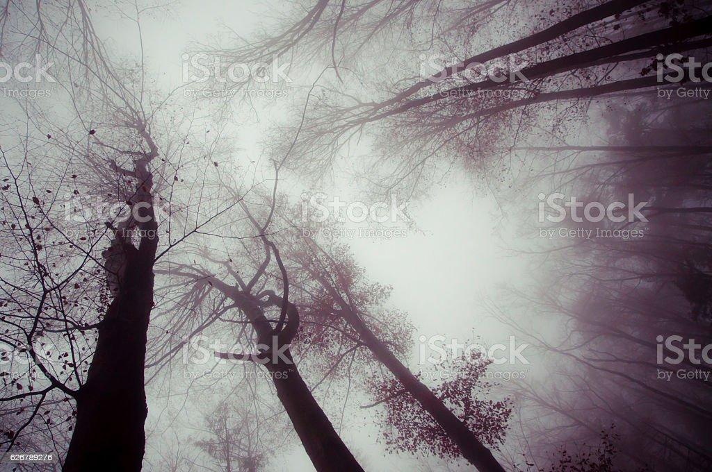 trees and dark foggy day stock photo
