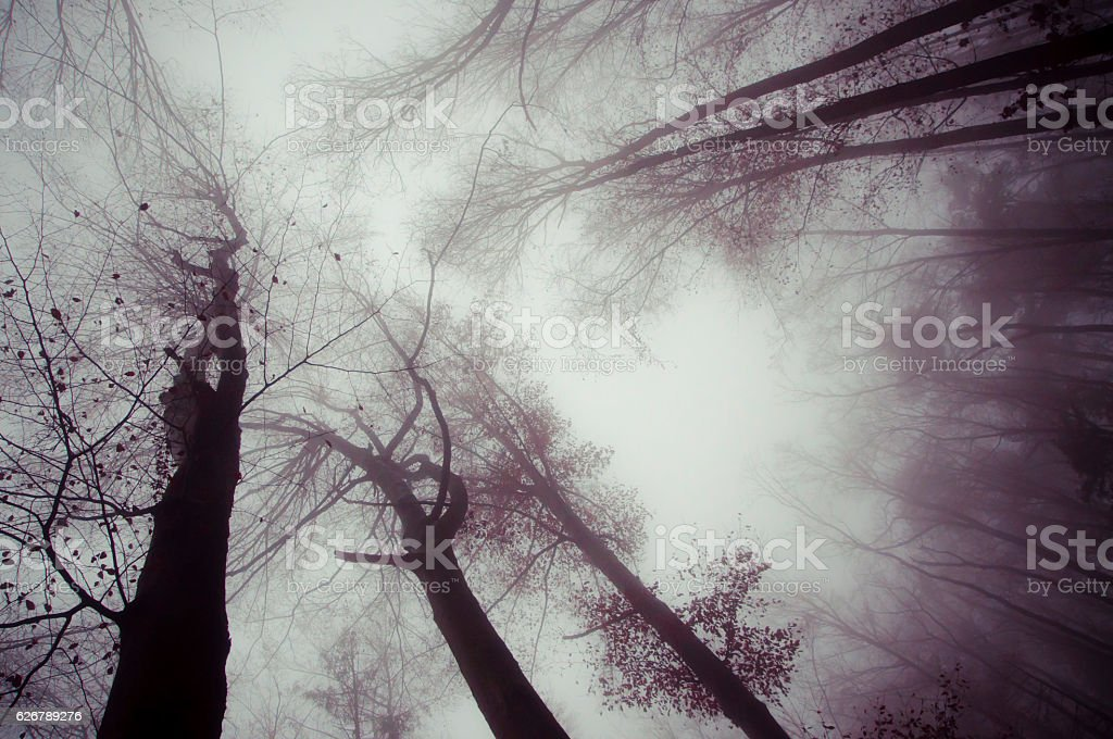 trees and dark foggy day stock photo
