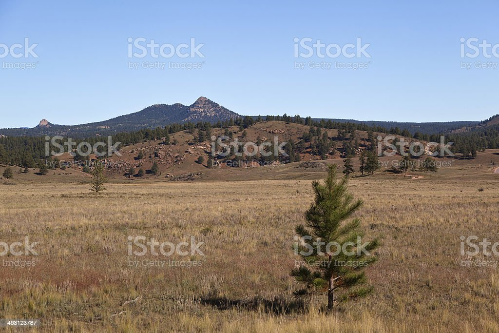trees and field on florissant national monument stock photo