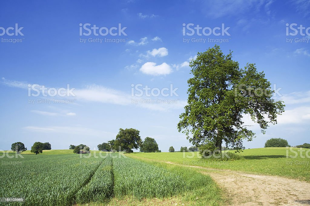 trees and fields royalty-free stock photo