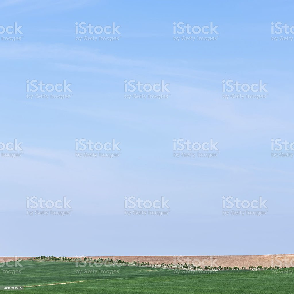 trees and fields stock photo