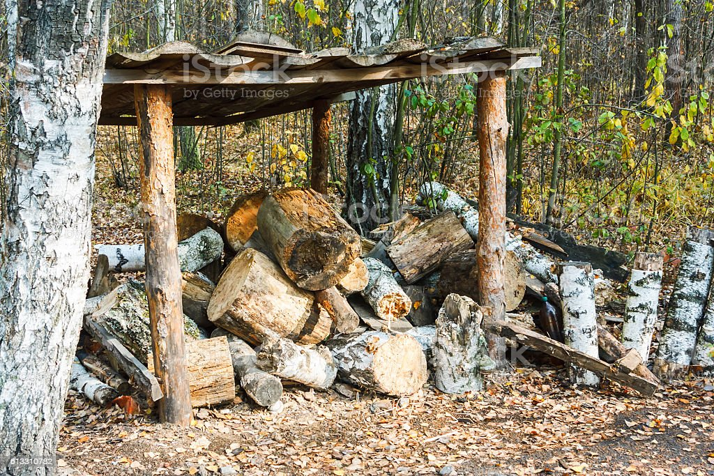 Trees and firewood stock photo