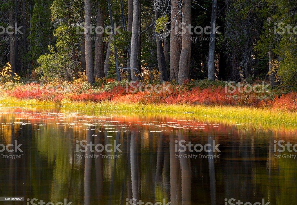 Trees and foliage reflecting into a Yosemite pond royalty-free stock photo
