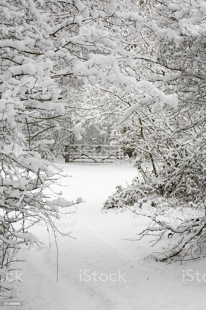Trees and gate in snow royalty-free stock photo