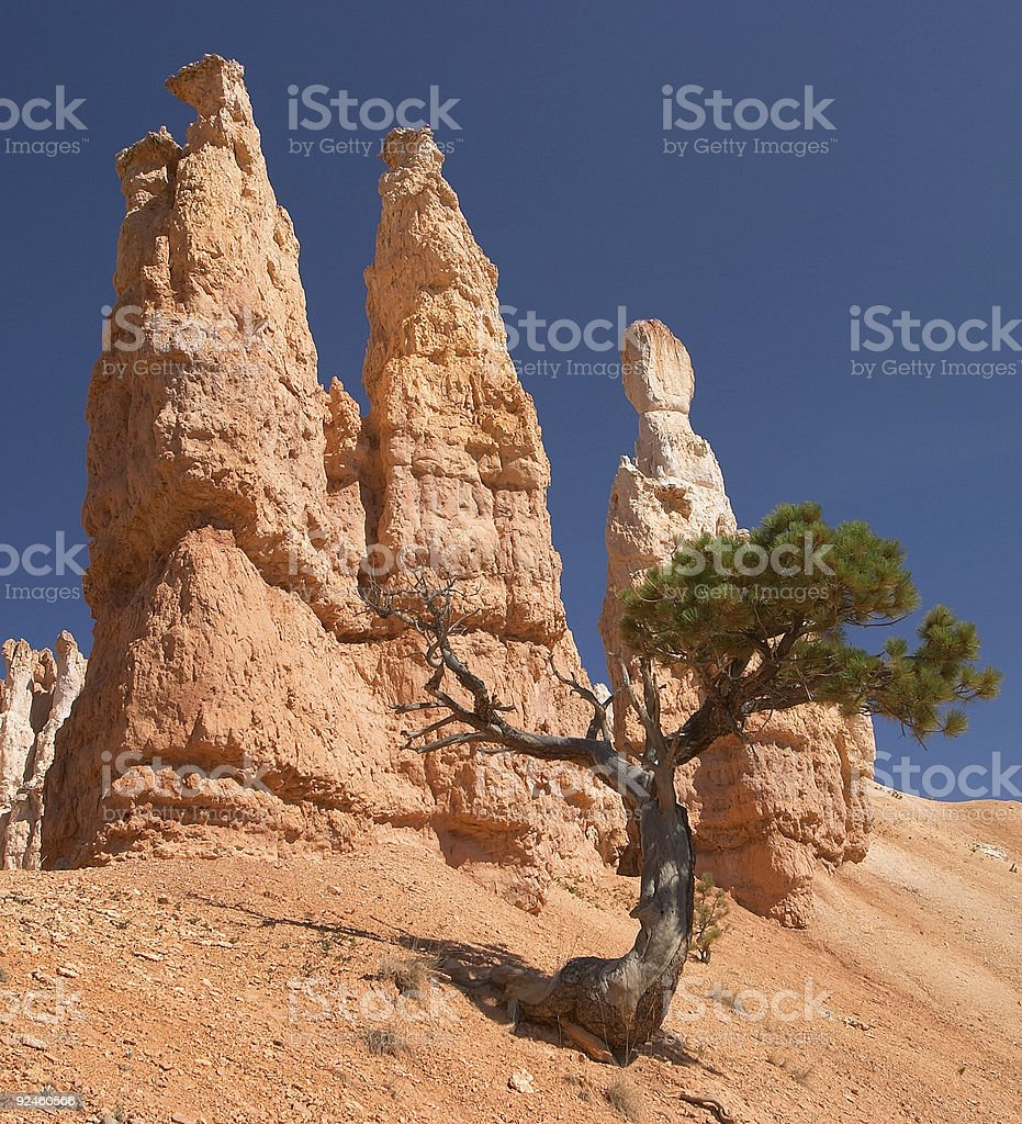 Trees and Hoodoo's in Bryce Canyon National Park royalty-free stock photo