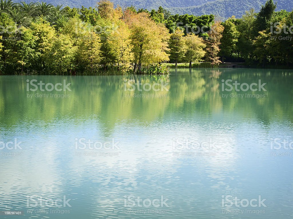 Trees and lake royalty-free stock photo