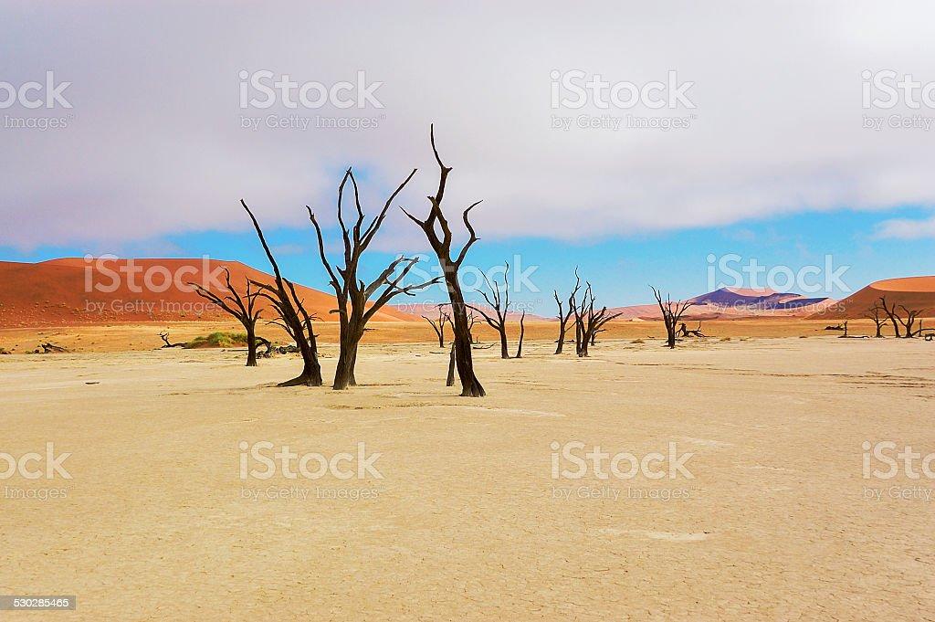 Trees and landscape of Dead Vlei desert, Namibia stock photo