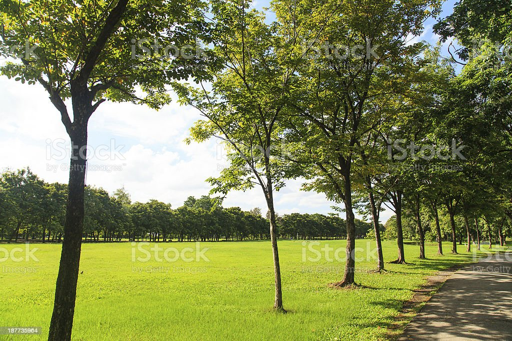 Trees and lawn in green park royalty-free stock photo