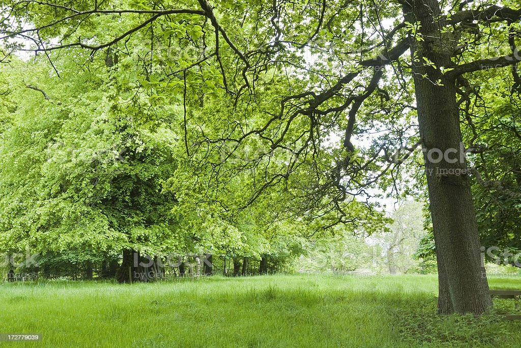 Trees and Meadow royalty-free stock photo