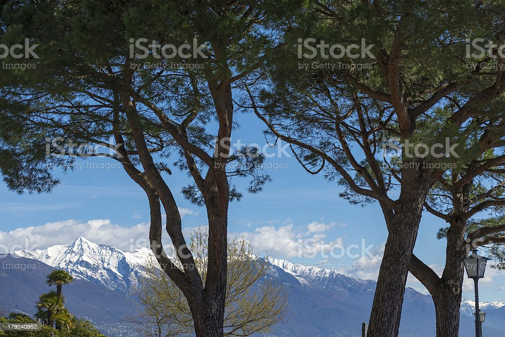 Trees and mountain royalty-free stock photo