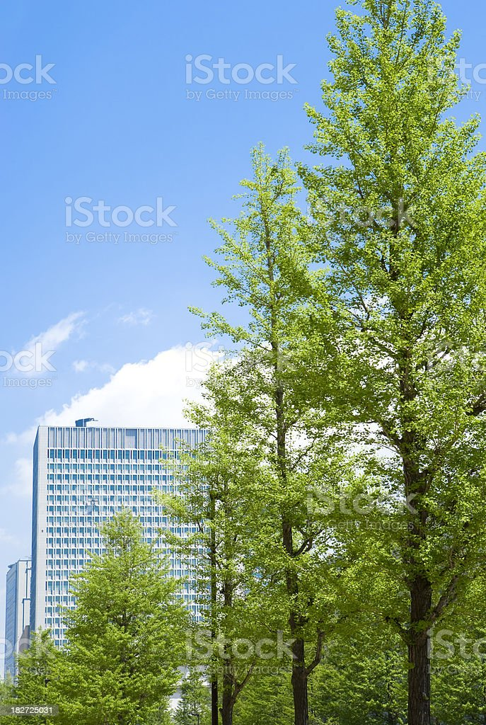 Trees and Office Buildings royalty-free stock photo