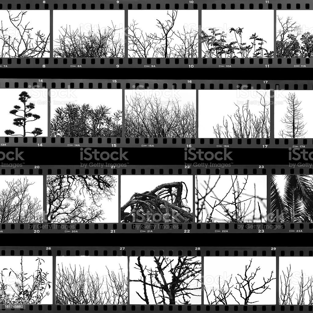 trees and plants film proof sheet stock photo